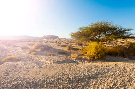 Hot afternoon sun of the Israel desert. Dusty mountains interrupted by wadis and deep craters. Imagens