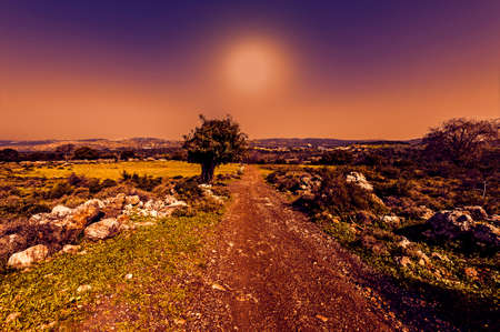 The nature of the western Galilee in Israel with forests, rocks, gorges and olive groves at sunset Standard-Bild
