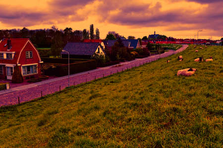 Sheep grazing on protective dam in Holland at sunset. High dike, protecting the low lying land with grazing sheep.