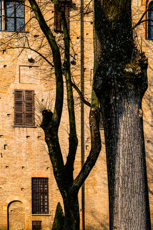 Whimsical shade of trees in the courtyard of the Duke of Gonzaga's palace in Mantua.