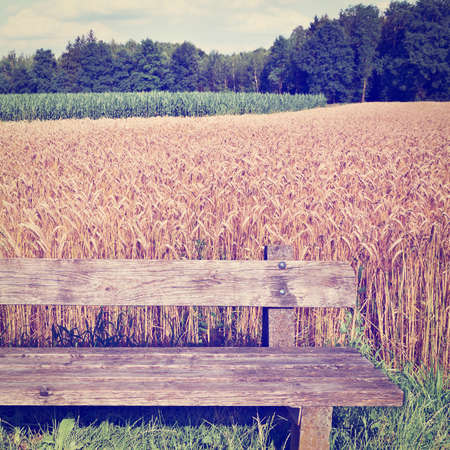 Wooden Bench against the Background of Wheat and Corn Fields in Bavaria, Germany Stock fotó