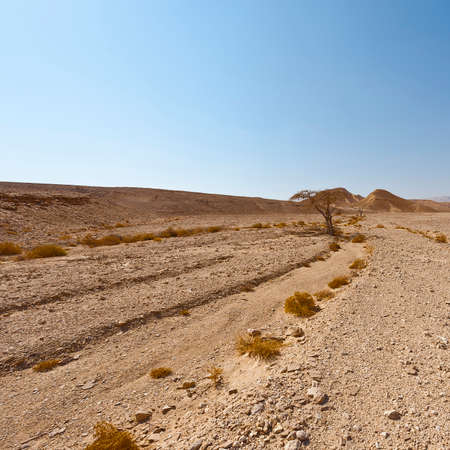 Melancholy and emptiness of the rocky hills of the Negev Desert in Israel. Breathtaking landscape and nature of the Middle East.