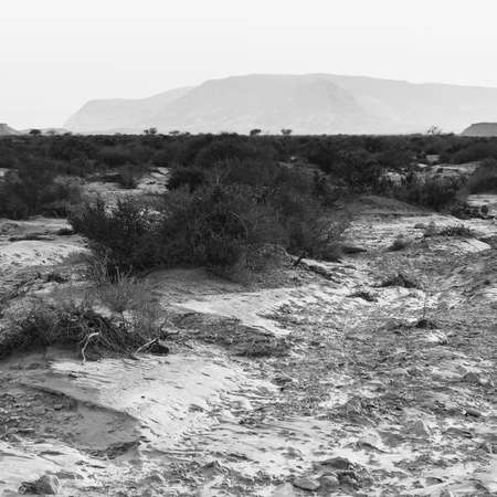Desolate infinity of the Rocky hills of the Negev Desert in Israel. Breathtaking landscape and nature of the Middle East. Black and white photo 免版税图像