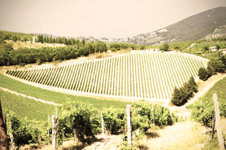 Vineyard landscape on the beautiful hills of Italy. Retro style