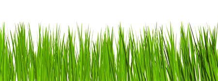 hidef: grass