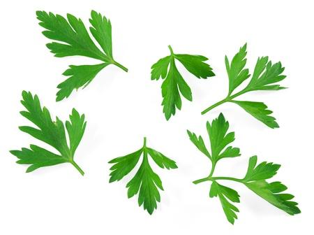 cilantro: Perejil de hierbas frescas