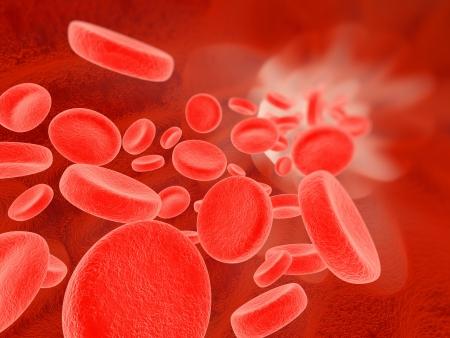 erythrocyte: Blood flow
