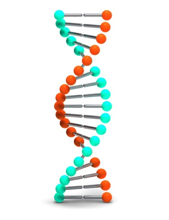 dna structure: DNA
