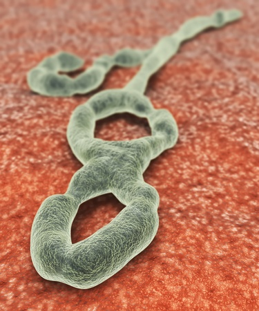 Illustration of the Ebola virus Banco de Imagens - 15322979