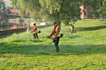 mow: Workers mow the grass