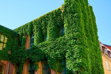 green building: Green wall on exterior of old building Stock Photo