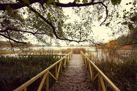 Wooden pier with leaves and tree branches in autumn Standard-Bild