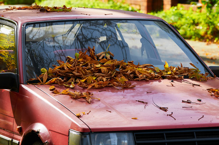 Autumn colored leaves on the Windshield Standard-Bild