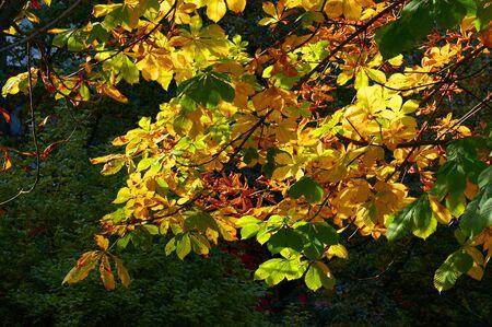Beautiful Colorful Autumn Leaves Standard-Bild