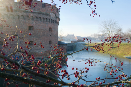 hawthorn berries on a background of old Fort
