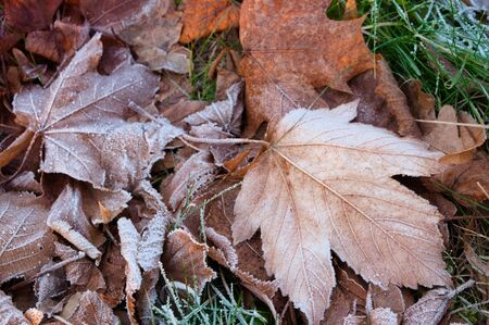 Frost covered leaf on the ground. Small DOF
