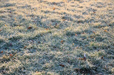 Frozen grass at sunrise close up