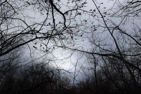 複数のタイプの木は、雨の日に絡み合っています。