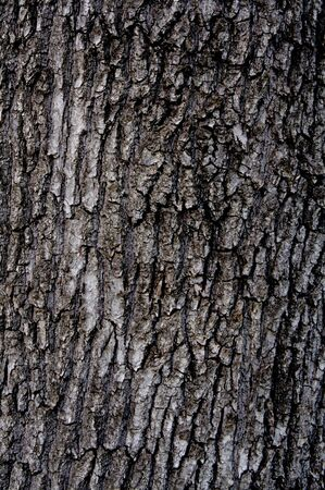 �corces: Wooden bark background