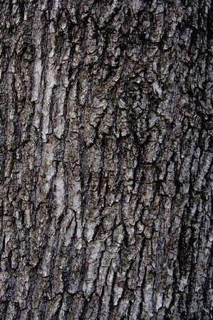 bark texture: Wooden bark background