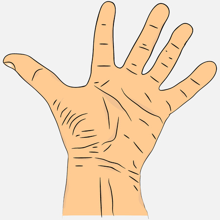 hand colored: Open palm with fingers spread apart.  Realistic mens hand colored version Illustration