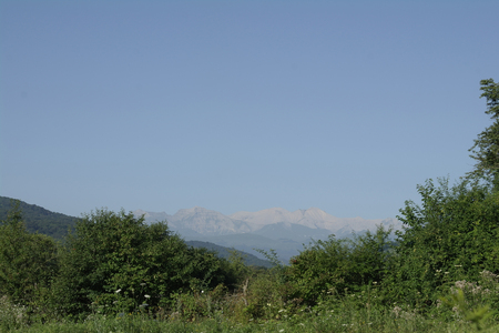 visible: The tops of the Caucasus visible between green trees