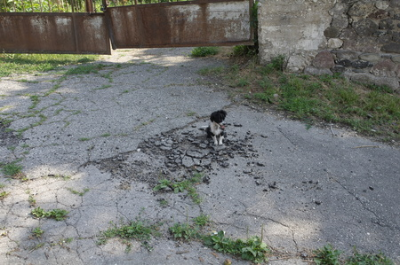 A small stray dog sits on a broken asphalt on the background of a rickety metal gate