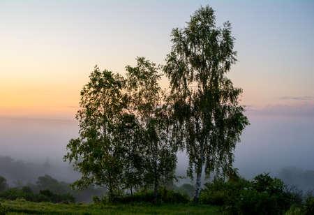Three birch trees in the background of morning predawn fog Archivio Fotografico