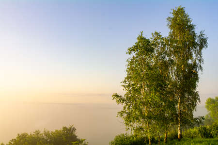 Birch trees in the morning fog, natural landscape.