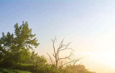 dead tree against the backdrop of a beautiful natural landscape, sunrise.