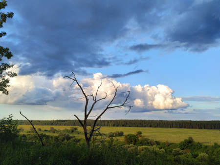 Dead tree on a background of dark blue and white clouds over the fields, smart Archivio Fotografico