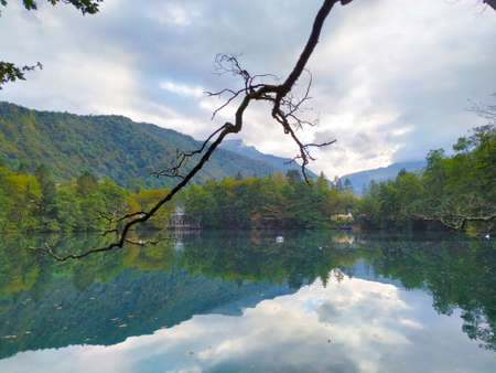 Dead tree branch on a mountain lake on a cloudy day