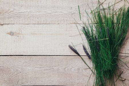 Fresh spring green grass lie over wood fence background