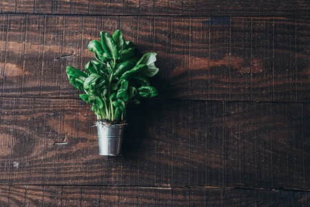 plant on wooden background