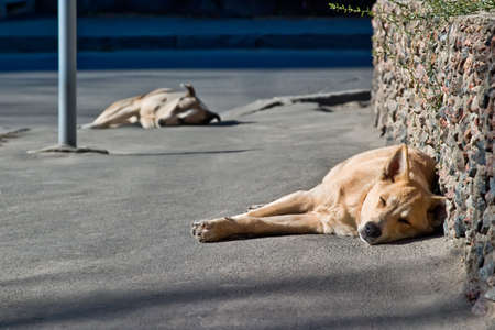 Two sleeping homeless dogs in street photo