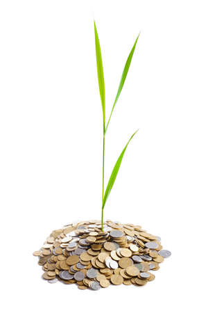 Young green plant is growing out of heap of coins isolated on white background photo