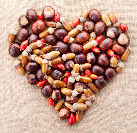 assorted acorns, chestnuts and dogrose heart on fabric texture background  photo