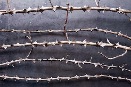 weerzinwekkend: droge takken met doornen op metaal textuur achtergrond