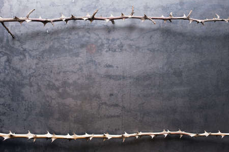 trees with thorns: Border from prickly dry branches on metal texture background
