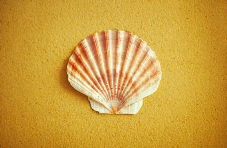 Rounded half of scallop shell on beach sand photo