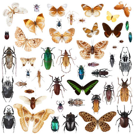 Set of insects on white background Imagens