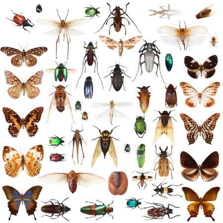 insecto: Conjunto de insectos en el fondo blanco