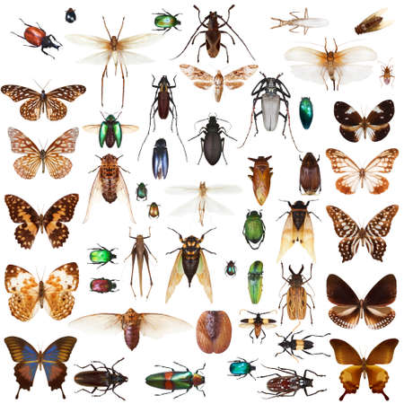 cicada bug: Set of insects on white background Stock Photo