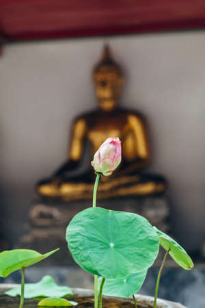 Lotus bud flower in Thailand monastery with buddah statue background