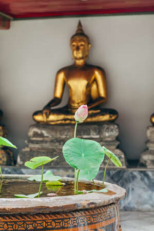 buddah: Lotus bud flower in Thailand monastery with buddah statue background
