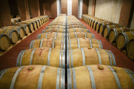 Rows of wooden barrels in wine cellar