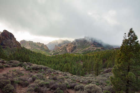 Beautiful mountains and forest landscape on Canary Islands, Spain. Nature background