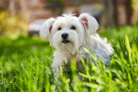 Cute white dog in the grass Stock Photo