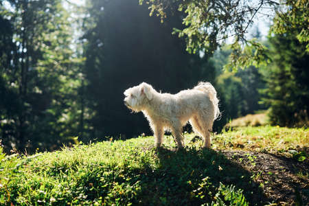 White adorable dog playing in forest on sunny day
