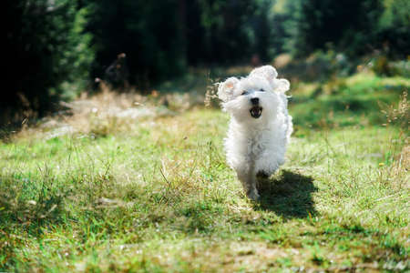 Funny cute dog playing and running outside in forest